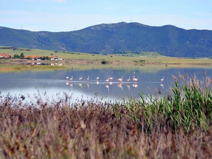 Бања Пикролимни